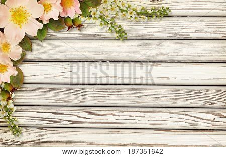 Wild rose flowers corner arrangement on old white painted wooden background