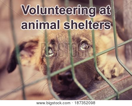 Concept of volunteering at animal shelters. Homeless puppy in cage outdoor
