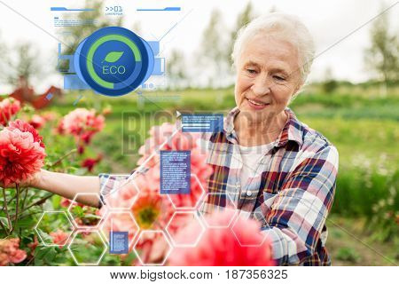 organic farming, gardening and people concept - happy senior woman with flowers blooming at summer garden