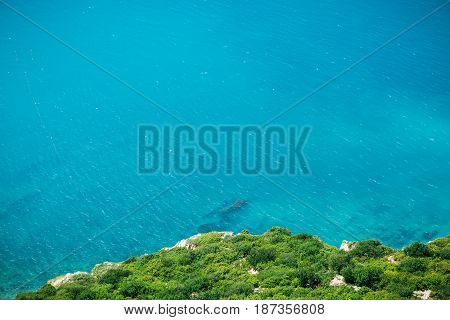Cliff with frees and blue sea. Summer day on ocean