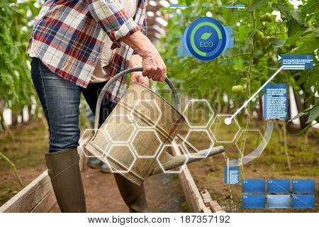 organic farming, agriculture and people concept - senior woman with watering can at farm greenhouse