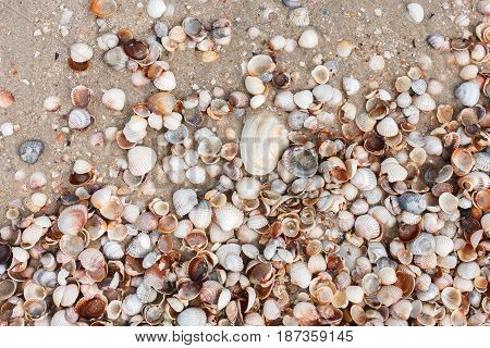Seashore background with seashells, top view. Natural sand textured surface