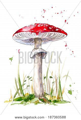 Postcard with amanita mushroom.Agaric and grass. Forest botanical picture. Watercolor hand drawn illustration.