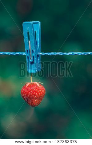 Red strawberry hanging on rope with clothespin