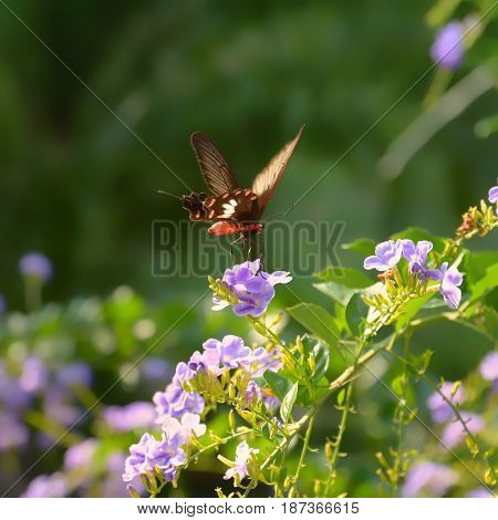 Butterfly on flower in the garden. Beautiful nature.