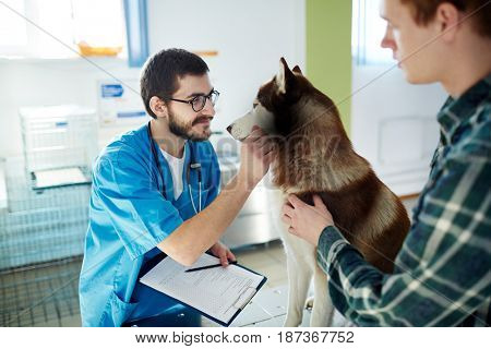 Vet clinician cuddling husky dog during medical treatment