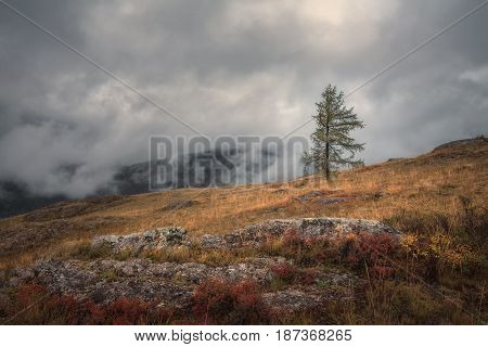 A lonely tree on a background of an autumn landscape and a heavy gloomy sky, Altai region, Siberia, Russia