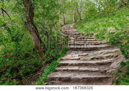 Way up the hill in the forest in Davedale, England