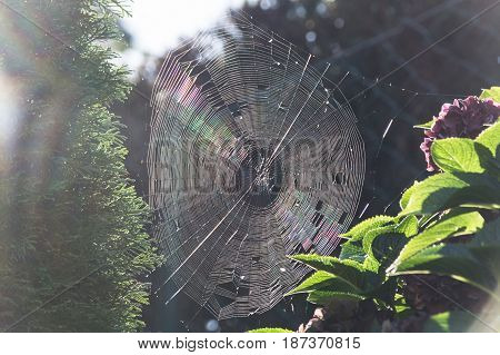 The spider's web or cobweb close up with colorful background.