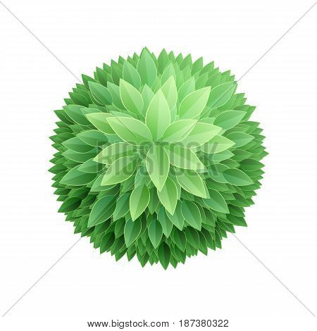 Round leaves background. Tree top view. Green nature abstract vector illustration.