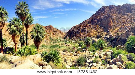 Palm oasis in Joshua Tree National Park California