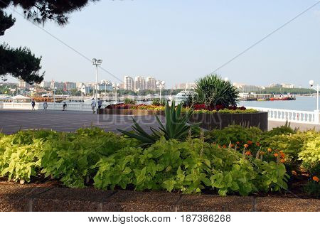 GELENDZHIK KRASNODAR REGION RUSSIA - AUGUST 02, 2014: Flower beds as a part of landscape design on the Gelendzhik city embankment. People having a walk across the waterfront in the background