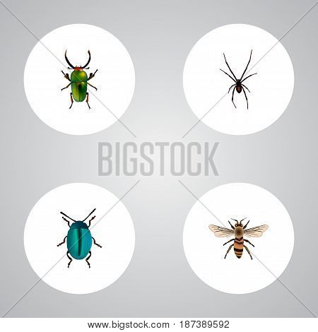 Realistic Wisp, Bug, Insect And Other Vector Elements. Set Of Bug Realistic Symbols Also Includes Spinner, Bug, Wasp Objects.