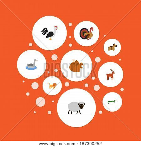 Flat Horns, Zebra, King And Other Vector Elements. Set Of Mammal Flat Symbols Also Includes Horns, Gecko, Nut Objects.