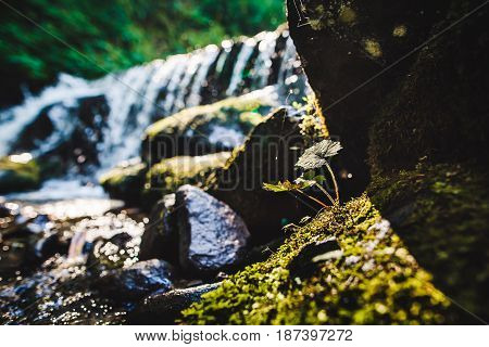 Leafs With A Mountain River On The Background
