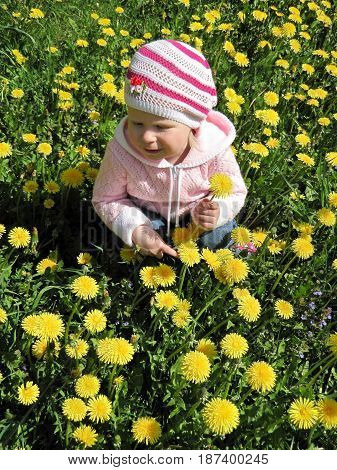 girl in a pink sweater sitting on a meadow of dandelions