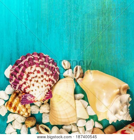 A square overhead photo of a sea star, sea shells, and pebbles on a vibrant turquoise background, a design template for a summer vacation banner, with copy space