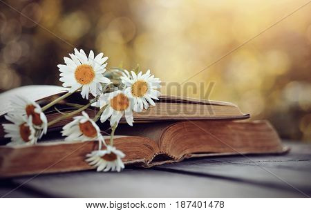 A bouquet of camomiles rested on an old open book.