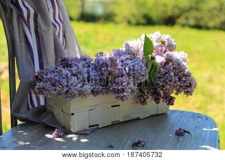 bouquet of lilac in a wicker basket in the garden
