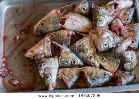 Heads of fish in a cup carp fish heads for fish soup.