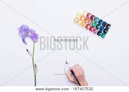 Woman's Hand Draws A Flower In A Notebook With Watercolors