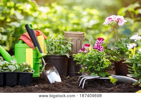Gardening tools and flowers in pot for planting at backyard