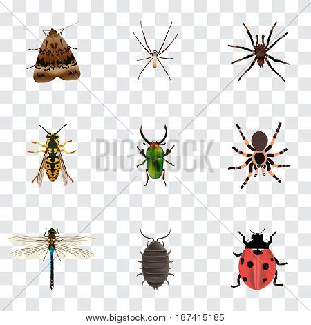 Realistic Dor, Butterfly, Damselfly And Other Vector Elements. Set Of Animal Realistic Symbols Also Includes Green, Spider, Sting Objects.