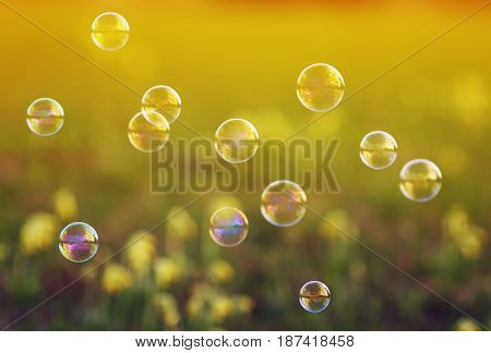 shiny iridescent soap bubbles flying over the Sunny meadow