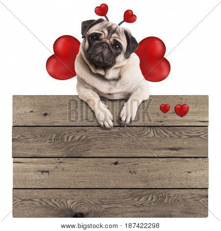 cute pug puppy dog hanging with paws on blank wooden vintage promotional sign with red hearts isolated on white background