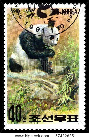 STAVROPOL RUSSIA - May 14 2017: A Stamp sheet printed in North Korea shows Panda are eating series Pandas circa 1991