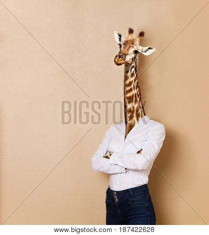 Portrait of giraffe woman dressed up white collar style, standing her arms folded, against background with copy-space, concept of office worker