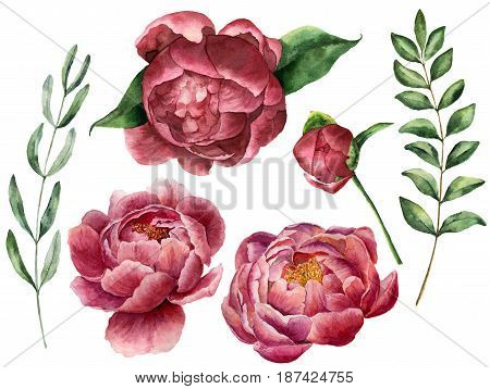 Watercolor floral set with peony and greenery. Hand painted flowers with leaves, branch of eucalyptus and rosemary isolated on white background. Botanical illustration for design
