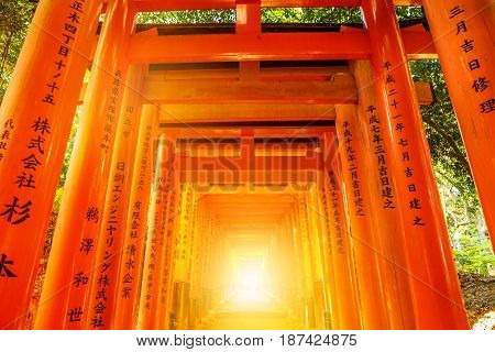 Kyoto, Japan - April 28, 2017: Perspective view of red Torii gates of famous Fushimi Inari taisha. Fushimi Inari is the most important shinto sanctuary and the oldest in Kyoto. Sunrise light shot.