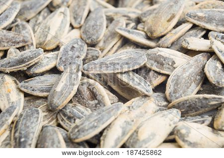 delicious roasted and salted sunflowers seeds in their shells. Close up sunflowers seed