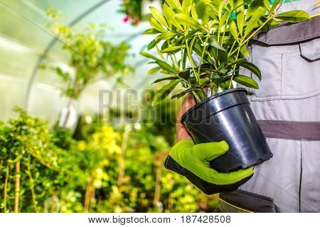 Choosing Right Garden Flowers Photo Concept. Gardener with a Flower in Hand.
