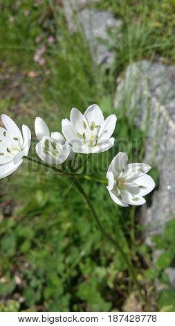 Linda flor branca - fundo da imagem