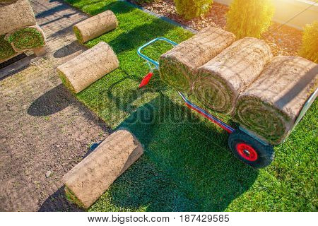 Natural Grass Turf Installation in the Backyard Garden. Gardening Theme.
