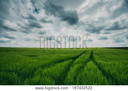 Sunset On Green Wheat Field And Dramatic Cloudscape