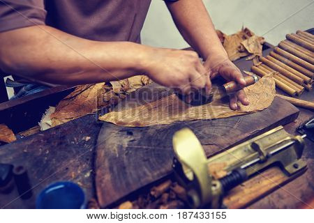 Closeup of hands making cigar from tobacco leaves. Traditional manufacture of cigars. Dominican Republic