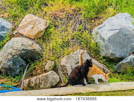 Two cats one black one orange and white together in concrete parking lot with large boulders on grassy hill in background