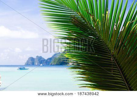 Idyllic Coast Palms Overhanging