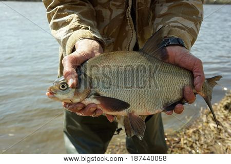 Big bream in fisherman's hand, spring catch in a river