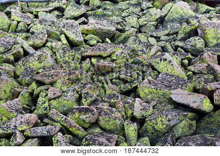 Bright and Dark Green Moss Lichen Fungus Covered Rocks