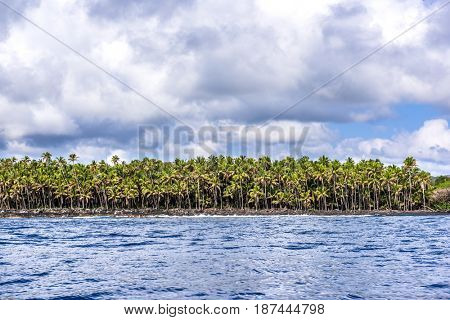 Tropical palm trees line the shoreline of the Big Island in Hawaii during a vibrant, bright colorful day.