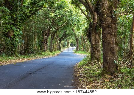 A canopy of trees over a remote road in Hawaii creates a stunning scene as one drives through the green forest.