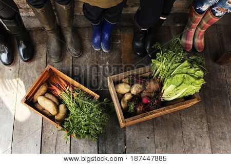 Diverse People Legs Wearing Farming Boots with Fresh Vegetable