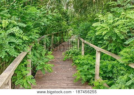 Swampland walkway overgrown by nature
