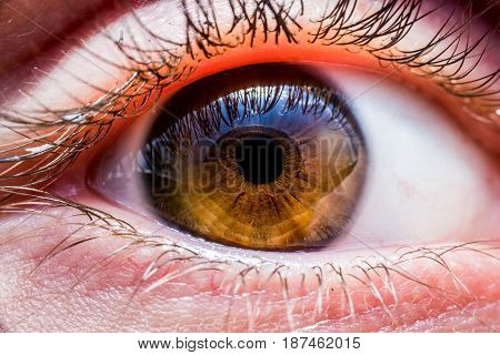Beautiful brown human eye very close up macro photography