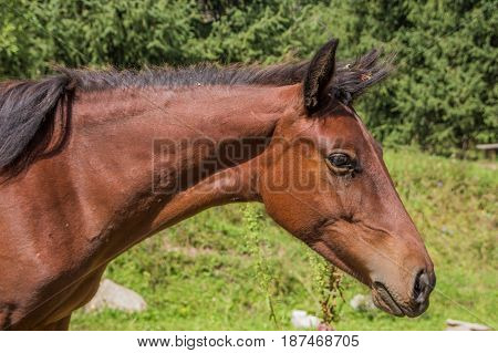 Portrait Horse In Summer, Almaty, Kazakhstan. Close Up