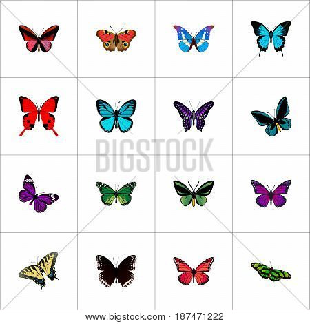 Realistic Callicore Cynosura, Purple Monarch, American Painted Lady And Other Vector Elements. Set Of Beauty Realistic Symbols Also Includes Sky, Beautiful, Purple Objects.